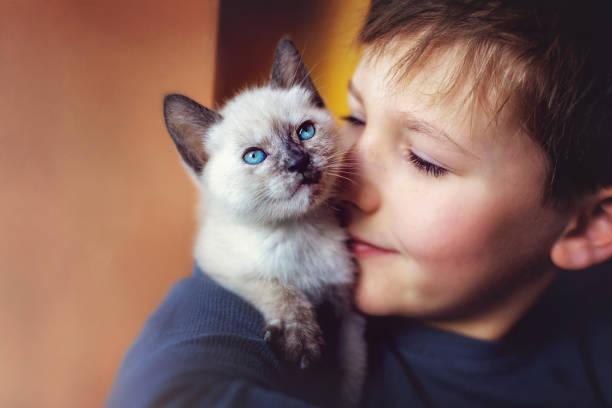 Petit garçon qui fait un câlin à son chaton